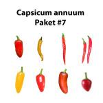 Capsicum annuum Paket