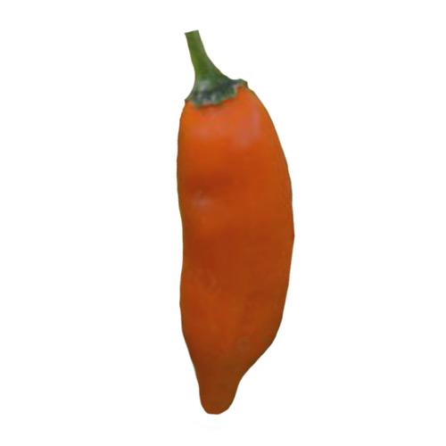Jalapeno Orange